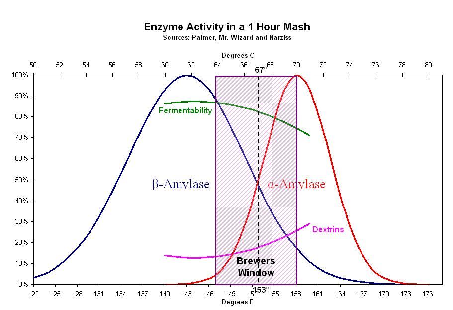Enzym aktivitet